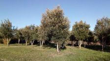 Vente Terrain Lacave (46200)
