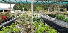 Fond de Commerce de Jardinerie, Plantes, Fleurs en Essonne 209000 91490 Milly-la-foret