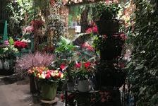 A VENDRE- fonds de commerce fleuriste 55000 75015 Paris 15e arrondissement