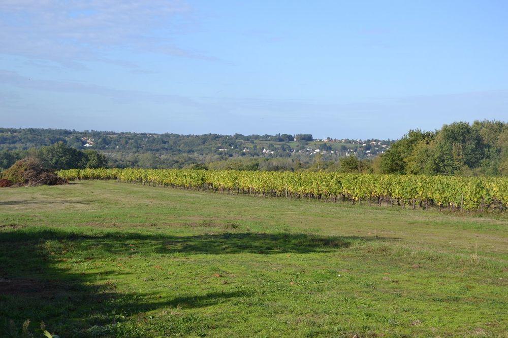 image_0 : Vente Terrain 2300 m² à Le cellier (44850) région Le Cellier