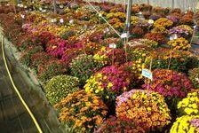 Jardinerie - Pépinière - Horticulture