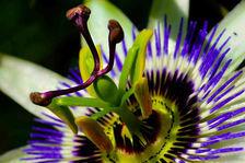Boutique de fleurs VAL D'OISE référence: F0118 67200