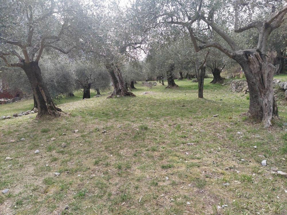 Vente Terrain Terrain pour 4 villas Breil sur roya