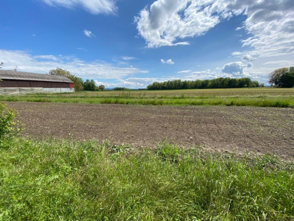Vente Terrain Hors lotissement : Beau Terrain de 10 ares au calme et face aux champs Selestat