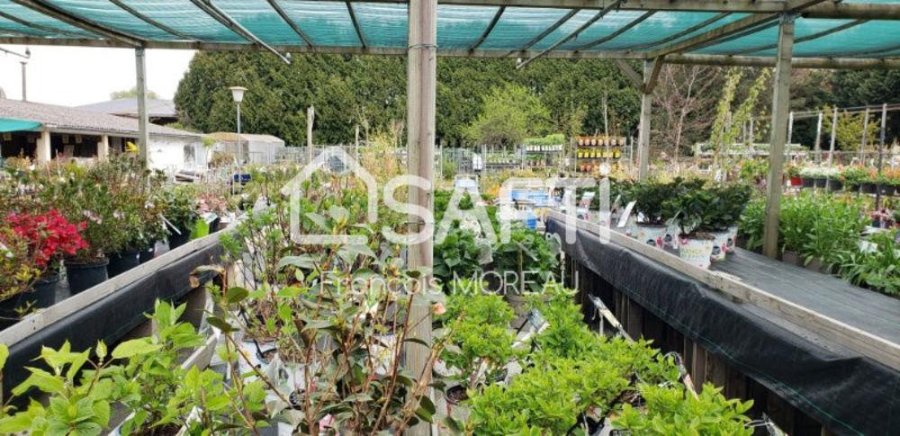 Fond de Commerce de Jardinerie, Plantes, Fleurs en Essonne