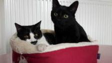 adoption 2 chatonnes de 5 mois 120
