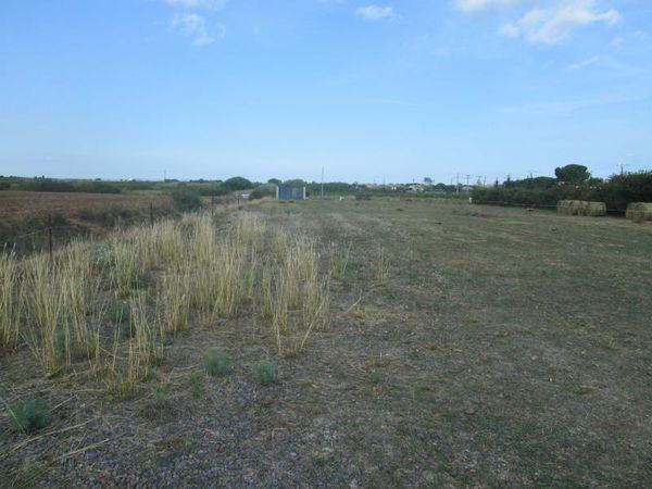 Annonce vente terrain marseillan 34340 5000 m 146 for Container sur terrain agricole