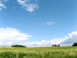 Terrains à batir   Sandillon (45640)
