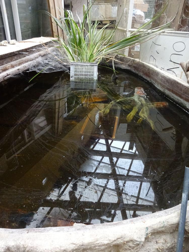 bassin de jardin 250 Corbeil-Essonnes (91)